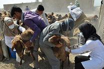 ایمنسازی ۳ میلیون و ۲۵۶ هزار رأس دام در خراسان رضوی علیه بیماری «شاربن»