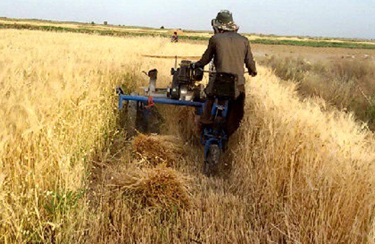 پیش بینی برداشت بیش از 1500 تن جو از مزارع شهرستان نایین
