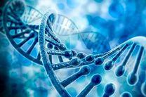 آغاز به کار هشتمین کنگره بینالمللی و جشنواره دانشجویی طب تولید مثل و ژنتیک در یزد
