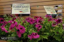 تولید ۱۱ میلیون گل در نوشهر