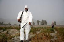 اتمام طرح مبارزه با ملخ بومی در کشتزارهای خراسان رضوی