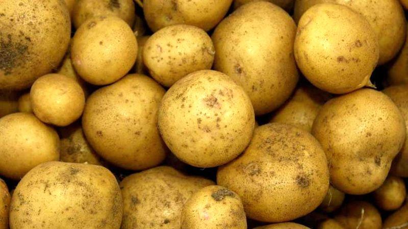 ممنوعیت صادرات سیب زمینی به عراق لغو شد