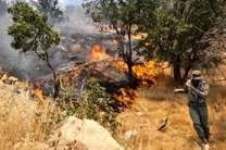 آتشسوزی در جنگلهای پلدختر مهار شد