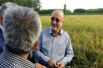 برداشت مکانیزه برنج در گیلان آغاز شد