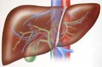 چاقی شکمی مهمترین عامل ابتلا به کبدچرب / عواملی که کبد را از کار میاندازد