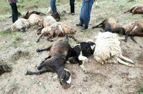 تلف شدن 36 راس دام در استان کردستان براثر صاعقه وبارش های شدید