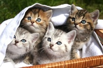 بیماری های سخت و لاعلاجی که از گربه به انسان منتقل می شود