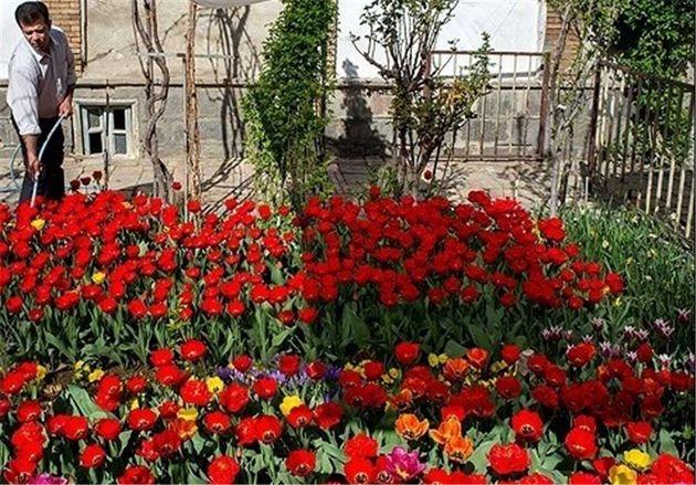پرداخت تسهیلات ۵۰ میلیارد ریالی برای تولید گلهای آپارتمانی در  گلستان