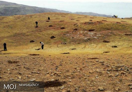 عملیات کپه کاری در مراتع قشلاقی شهرستان رومشکان آغاز شد