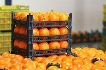 آغاز توزیع میوه دولتی در اصفهان