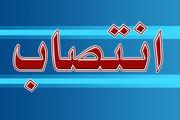 مسعود اسعدی دبیر شورای هماهنگی پاسداشت زبان فارسی شد