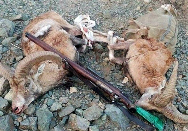 7 شکارچی متخلف پس از 72 ساعت تعقیب و گریز در سفیدکوه خرمآباد دستگیر شدند