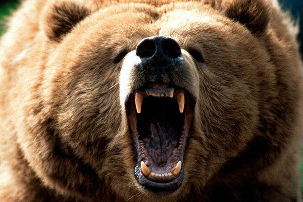 حمله خرس به یک مرد در ارتفاعات رودان