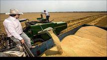 خرید تضمینی گندم  در خوزستان به یک میلیون و ۵۰ هزار تن رسید/ خرید 29 هزار تن کلزا از کشاورزان