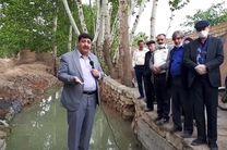 نجات هزاران درخت چنار در منطقه سرلت خمینی شهر