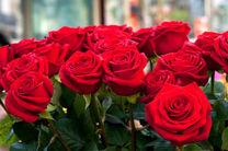 برگزاری جشنواره گل سرخ همزمان عید فطر در اصفهان