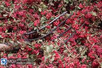 پیش بینی برداشت بیش از 21 تن زرشک از باغات استان اصفهان