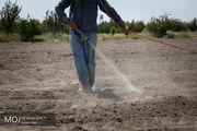 ارتش ملخهای مهاجم در راه هرمزگان/موج چهارم حمله ملخهای مهاجم
