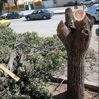 قطع شدن ناگهانی درخت در نوده خاندوز منجر به فوت نیروی شهرداری شد