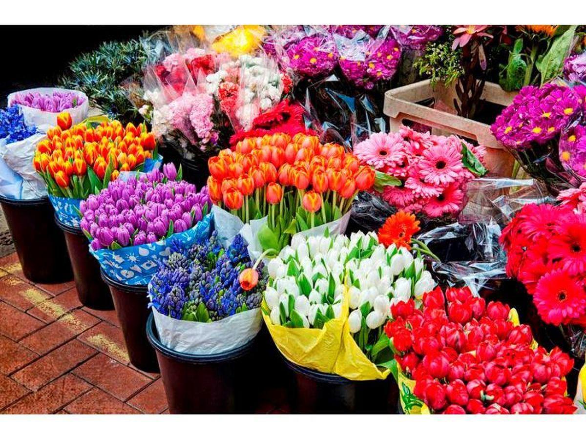صادرات 105 هزار گلدان گل از نوشهر