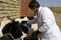 کاهش 60 درصدی بروز تب مالت در شهرستان دالاهو