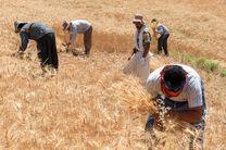 بانک کشاورزی ۶ هزار میلیارد تومان از مطالبات گندم کاران را داد