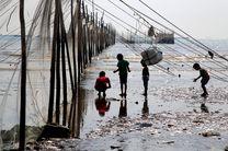 صید آبزیان در آبهای هرمزگان ممنوع شد
