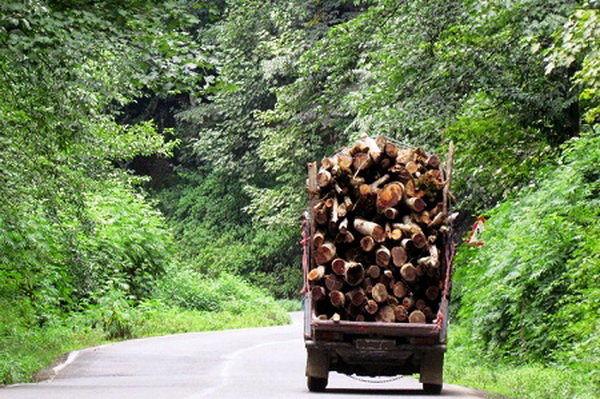 7 تن و 500 کیلو گرم انواع چوب جنگلی قاچاق کشف شد