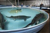 افتتاح بزرگترین مرکز تکثیر پرورش ماهیان خاویاری در تالش /آغاز ساخت یازدهمین سد لاستیکی گیلان