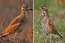 رهاسازی چهار قطعه پرنده در منطقه حیات وحش یخاب در آران و بیدگل