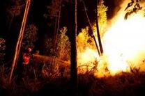 درخواست محیط زیست از قضات برای اشد مجازات آتش افروزان جنگلها