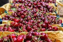 سالانه بیش از 5 هزار تن آلبالو و گیلاس از باغات لرستان برداشت میشود