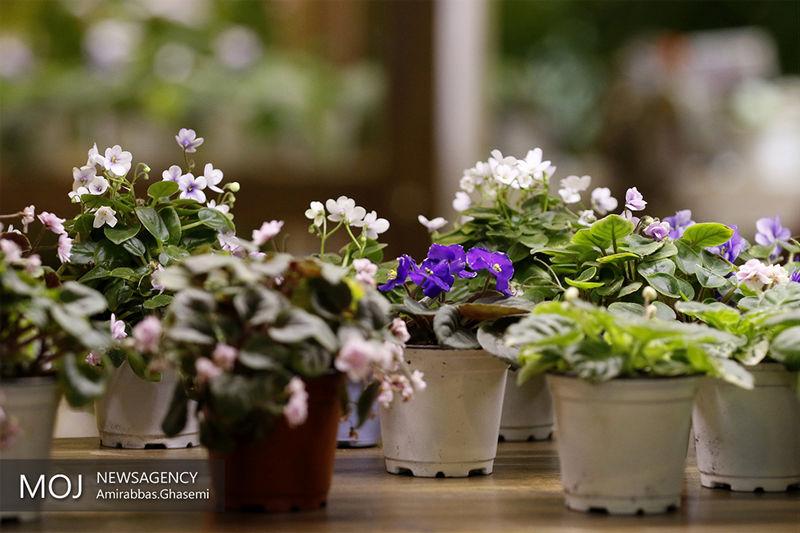 ۱۴۰ هزار گلدان گل و گیاه زینتی از تنکابن صادر شد