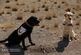 مانور سگ های زنده یاب در معدن با همکاری صلیب سرخ ایران+فیلم