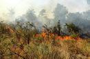 وقوع 6 آتش سوزی در جنگل های مشگین شهر