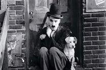 دانلود زیرنویس فیلم A Dog's Life 1918