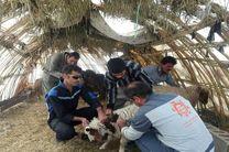 خدمترسانی اکیپهای دامپزشکی استان مرکزی در مناطق زلزلهزده