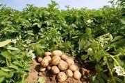 نظارت  حداکثری بر قیمت مرغ/ کاهش قیمت سیبزمینی در همدان