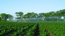 سرمایه گذاری یک هزار میلیارد تومانی در بخش کشاورزی هرمزگان
