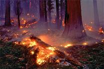 """آتشسوزی در جنگلهای """"قرق"""" گرگان مهار شد/۲ هکتار جنگل در آتش سوخت"""