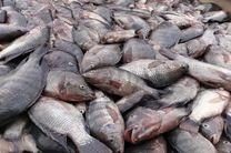 فائو درباره شیوع ویروس مرگبار تهدید کننده ماهی تیلاپیا هشدار داد