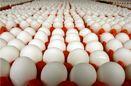 مصرف تخم مرغ در ایران نصف میانگین جهانی است