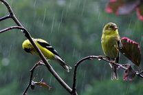 ورود موج دوم بارشی به خوزستان/انتظار بارش باران از امروز تا دوشنبه هفته جاری برای آسمان استان