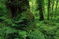 بازدید از سه سایت جنگلهای هیرکانی گیلان به همراه نمایندگانی از یونسکو