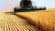 خریدتضمینی کلزا و گندم از کشاورزان هرمزگان