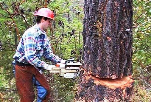 قطع درختان جنگلی موجب تاراج منابع ملی کشور می شود