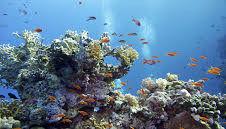 تاثیر منفی فرسایش بستر دریا بر صخرههای مرجانی