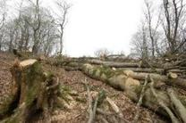 بازی سیاسی در دست کاری آمار کاهش جنگل های شمال