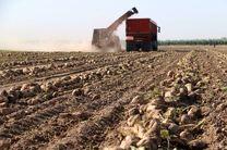 برداشت چغندر قند از مزارع شهرستان فامنین آغاز شد