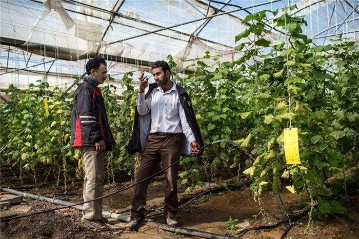 صدور مجوز تاسیس ۲۴ شهرک خصوصی گلخانه ای/تنها راه علاج خشکسالی کشور توسعه گلخانه ها است
